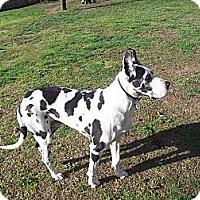 Adopt A Pet :: Isha - Lexington, TN