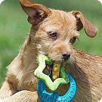 Adopt A Pet :: LuLu - Providence, RI