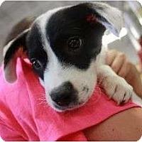 Adopt A Pet :: Birdie - Arlington, TX