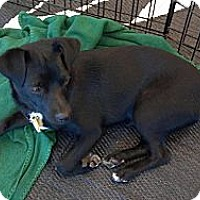 Adopt A Pet :: Cracker Jack - Phoenix, AZ