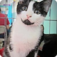 Adopt A Pet :: Sylvester - Seminole, FL