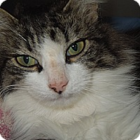 Adopt A Pet :: Jewel - Medina, OH