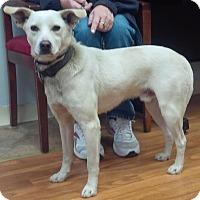 Adopt A Pet :: Maxwell ($300 Adoption Fee!) - Washington, DC