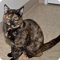 Adopt A Pet :: Halle - Medina, OH