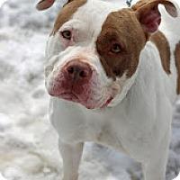 Adopt A Pet :: Queen - Tinton Falls, NJ