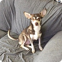 Adopt A Pet :: Reese - San Antonio, TX