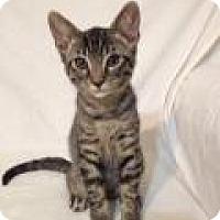 Adopt A Pet :: Joel - Orange City, FL