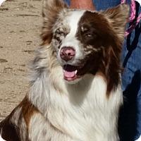Adopt A Pet :: Jack - Greeley, CO