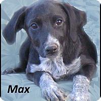Adopt A Pet :: Max- -Adoption Pending - Marlborough, MA