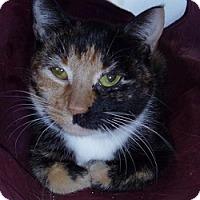 Adopt A Pet :: Vivian - Hamburg, NY