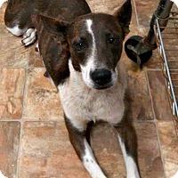 Adopt A Pet :: Prue - Kimberton, PA