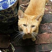 Adopt A Pet :: Sanford - Alexandria, VA