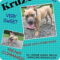 Adopt A Pet :: Kruzer - Wanaque, NJ