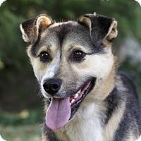 Adopt A Pet :: GUNNER - Ile-Perrot, QC