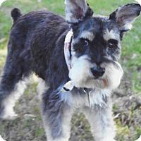 Adopt A Pet :: Sam - Sharonville, OH
