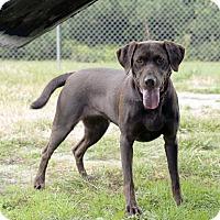 Adopt A Pet :: Georgia - Fremont, NE
