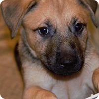 Adopt A Pet :: Anya - Abbeville, LA