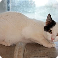 Adopt A Pet :: Snow - Edgewood, NM