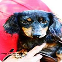 Adopt A Pet :: MAISEY - Peoria, IL