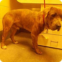 Adopt A Pet :: *KANE - Upper Marlboro, MD