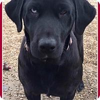 Adopt A Pet :: Hannah - Elburn, IL
