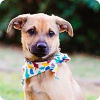 Adopt A Pet :: Eli - San Ramon, CA