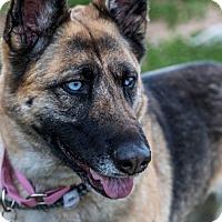 Adopt A Pet :: Crystal - Phoenix, AZ