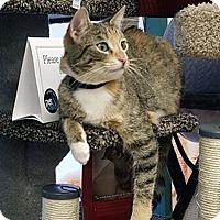 Adopt A Pet :: Avianna - Mississauga, Ontario, ON