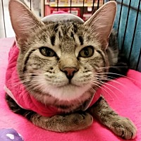 Adopt A Pet :: Cecelia - Knoxville, TN