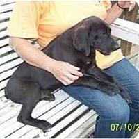 Adopt A Pet :: Sawyer - Wakefield, RI