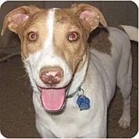 Adopt A Pet :: Casey - Golden Valley, AZ
