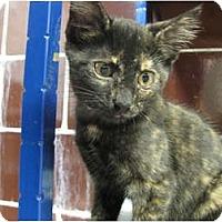 Adopt A Pet :: Jalapeno - Centerburg, OH