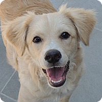Adopt A Pet :: Neville - La Habra Heights, CA