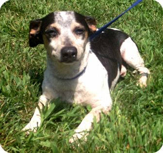 Figaro | Adopted Dog | 81XXXURGENT | Bloomfield, CT ...