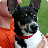 Adopt A Pet :: Diego - Richmond, VA