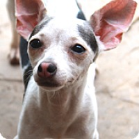 Adopt A Pet :: Dallas - MEET HER! - Norwalk, CT
