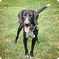 Adopt A Pet :: Jagger - Lewisville, IN