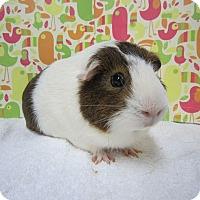 Adopt A Pet :: Newton - Aurora, CO