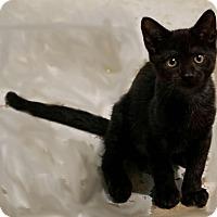 Adopt A Pet :: Gemma - Morganville, NJ