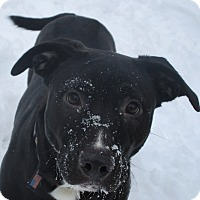 Adopt A Pet :: Brenna - Red Wing, MN
