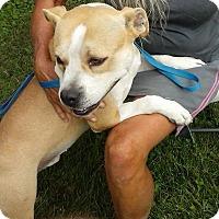 Adopt A Pet :: Denver - North, VA