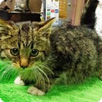 Adopt A Pet :: Buster - Lebanon, PA