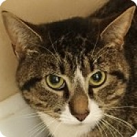 Adopt A Pet :: Snickers - Medford, MA