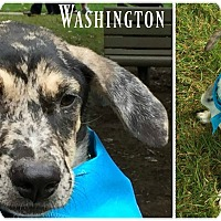 Adopt A Pet :: Washington - Kimberton, PA