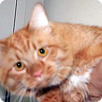 Adopt A Pet :: Goblin - Wildomar, CA