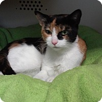 Adopt A Pet :: Magnolia - Franklin, NH