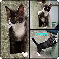 Adopt A Pet :: Holmes - California City, CA