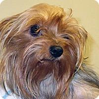 Adopt A Pet :: 318510 LF - Wildomar, CA