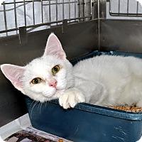 Adopt A Pet :: Ontario - Broadway, NJ