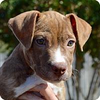 Adopt A Pet :: Chloe-ADOPTED - CRANSTON, RI